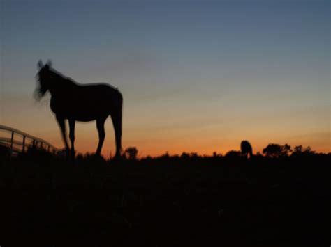 horses silhouette   clip art  clip