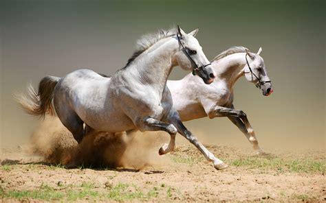mon bureau virtuel fond d 39 ecran chevaux au galop wallpaper