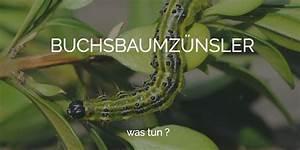 Buxbaum Raupen Bekämpfen : was tun gegen den buchsbaumz nsler ihr garten experte f r ~ A.2002-acura-tl-radio.info Haus und Dekorationen