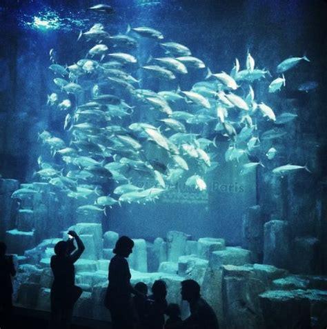 aquarium aquarium de cin 233 aqua tourbytransit