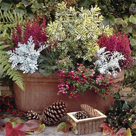 herbstbepflanzung balkon winterhart pflanzentipp schmucke herbstg 228 ste f 252 r balkon und terrasse