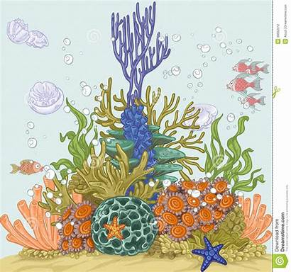 Coral Reef Illustration Sea Vector Fishes Anemones