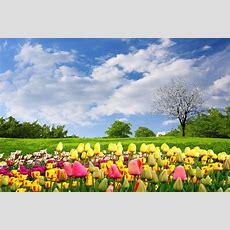 봄과 여름에 영감을 받은 유용한 영어 속담 및 표현 33  Fluentu English
