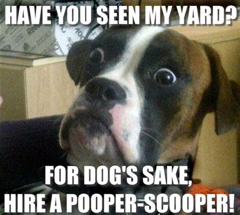 aaa turf scoop pet waste removal images