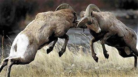 Rams Butting Heads: Rosenberg vs. Paulsen on the Economy