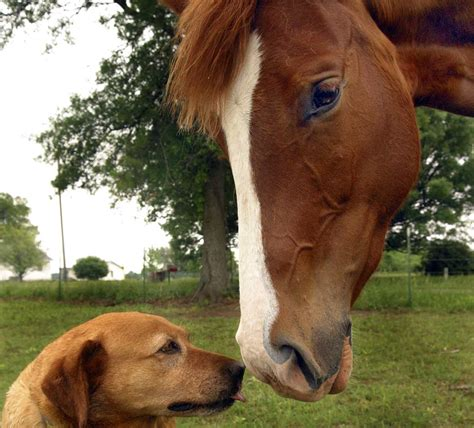 horse horses dog dogs cost race puppy friends versus most farm cheaper along doggy forest komi souldrop žijeme charity heart