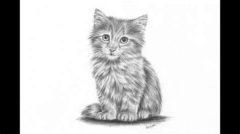 draw  realistic kitten part  fur  details