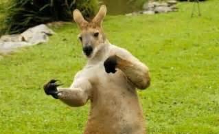 カンガルー:Funny Kangaroo 2013 Photography | Funny ...