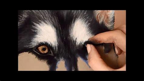 timelapse soft pastel drawing   husky youtube