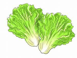 Lettuce Leaf Clipart