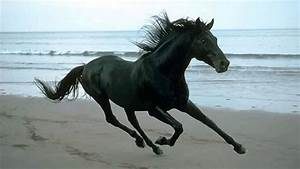6 Minutes of Horse Galloping Sound Effect - YouTube