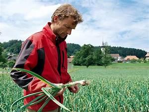 Cultiver De L Ail : agropreis la culture de l ail r invent e ~ Melissatoandfro.com Idées de Décoration