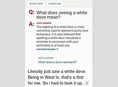 WORLD VIEW SYMBOLISM Q What Does Seeing a White Dove Mean