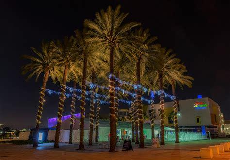 palm tree with lights lights card