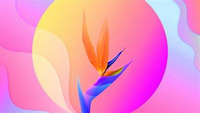 4k Flower Abstract Colorful Wallpapers Flowers Background