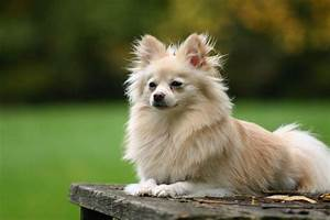 Top 25 Cutest Dog Breeds Around The World