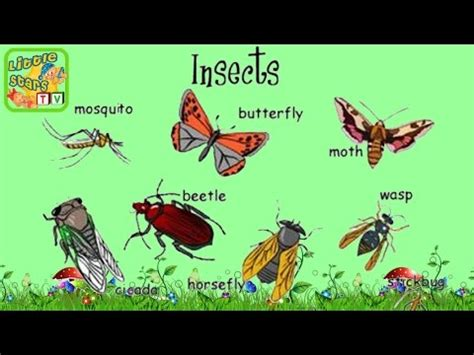 Insects, Animals Series, Bugs Learn Insects Name And Sounds, English For Kids Youtube