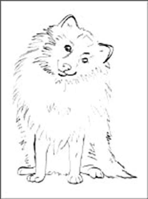 pomeranian coloring page coloring pages