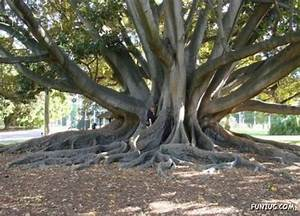 71 best For the Love of Trees images on Pinterest | Donna ...