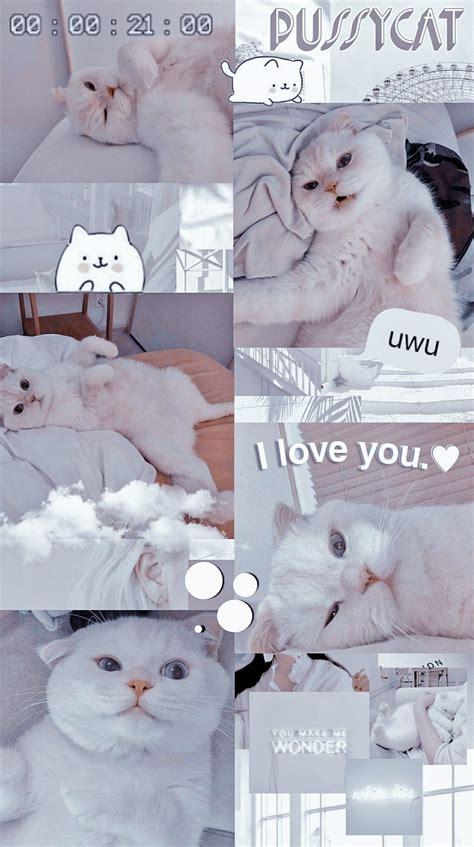 pussycat anak kucing menggemaskan anak kucing gemas