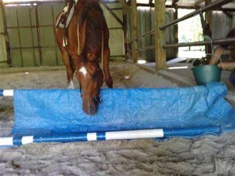 bidet cheval emelyne routier article obstacles regardants 1er bidet