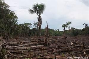 Amazon Destruction