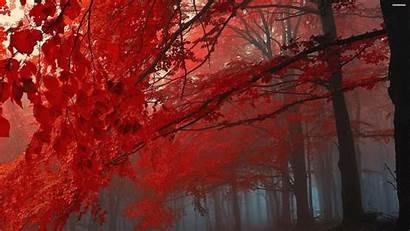 4k Autumn Desktop Fall Wallpapersafari Tablet