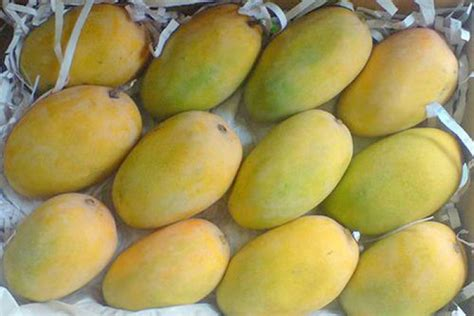 Fruits-mango Buy Or Sell Lead -we
