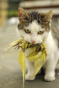 bird for cats cats and bird populations adventure sports journal
