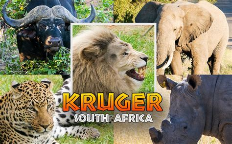 Guide to Game Driving in Kruger National Park, South