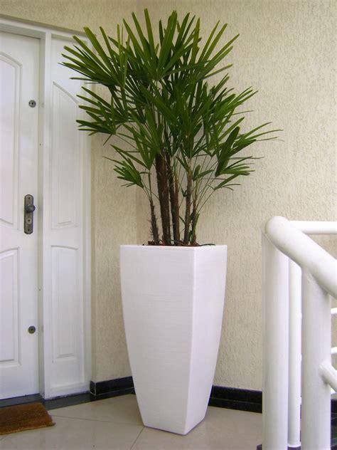 Arranjo com Palmeira Ráfis | Plantas para sala, Melhores ...