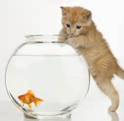 what do cats eat do cats eat goldfish how to stop cats from