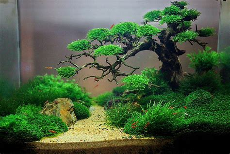 How To Make Aquascape by 7 Aquascape Bonsai Tree Driftwood Ideas Aquascape