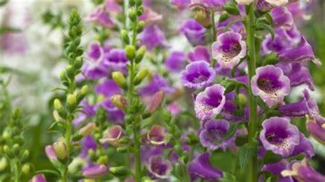worlds  deadly flowers bt