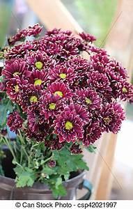 Beau Bouquet De Fleur : beau bouquet fleurs beau fournisseur fleur bouquet ~ Dallasstarsshop.com Idées de Décoration