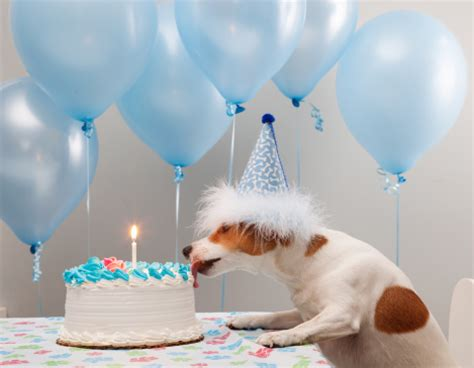 cutest pictures  birthday dogs pets world