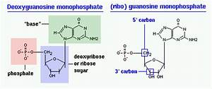 File:Nucleotides.gif - Wikimedia Commons
