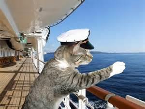 captain cats cat in captains hat