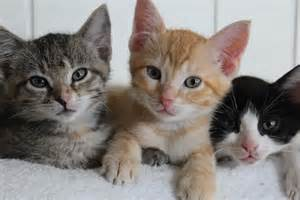 cats adoption process policies tenth cat rescue