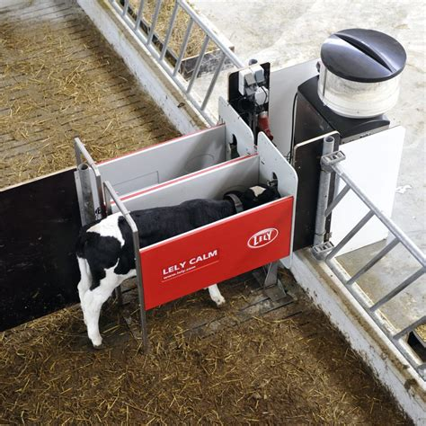 automatic calf feeders lely calf feeder designed to help identify calf health