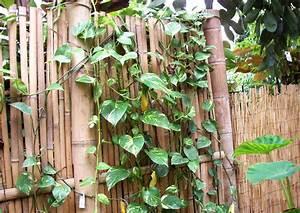 Sichtschutz Selber Bauen : sichtschutz aus bambus selber bauen bambusrohr und ~ Lizthompson.info Haus und Dekorationen