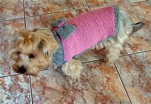 Video Pour Chien : pulls pour chiens au tricot ~ Medecine-chirurgie-esthetiques.com Avis de Voitures