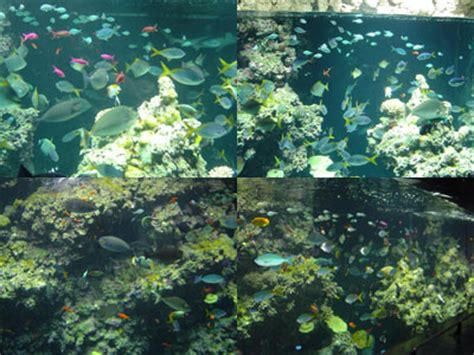 aquarium eau de mer temp 233 r 233 e