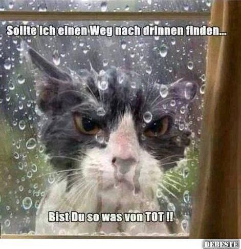die katze bei regen drau 223 en lassen lustige bilder