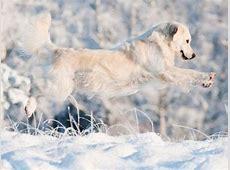 Tipps für den perfekten Winterspaziergang mit Hund