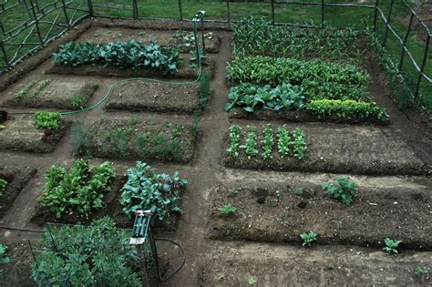 How To Plant A Vegetable Garden In Your Backyard by Vegetable Gardening Letters From Stonewell
