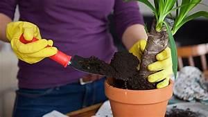 Gut Riechende Zimmerpflanzen : zimmerpflanzen umtopfen die besten tipps ~ Markanthonyermac.com Haus und Dekorationen