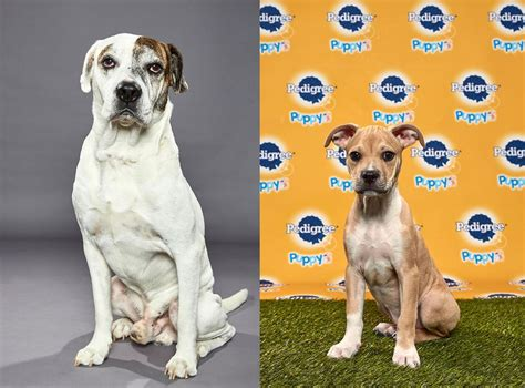 cheer   upstate ny rescue dogs  tvs puppy bowl