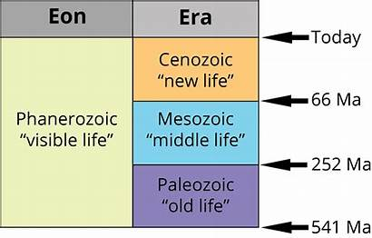 Phanerozoic Eras Geological Scale Paleozoic Mesozoic Cenozoic