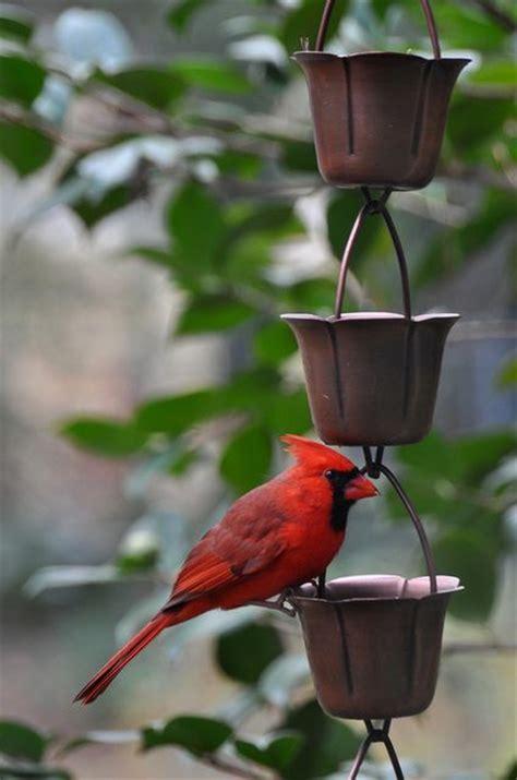 cardinal bird feeder how to build a cardinal bird feeder woodworking projects